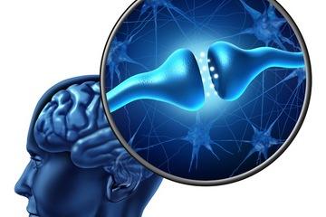 brain-neurons-141020