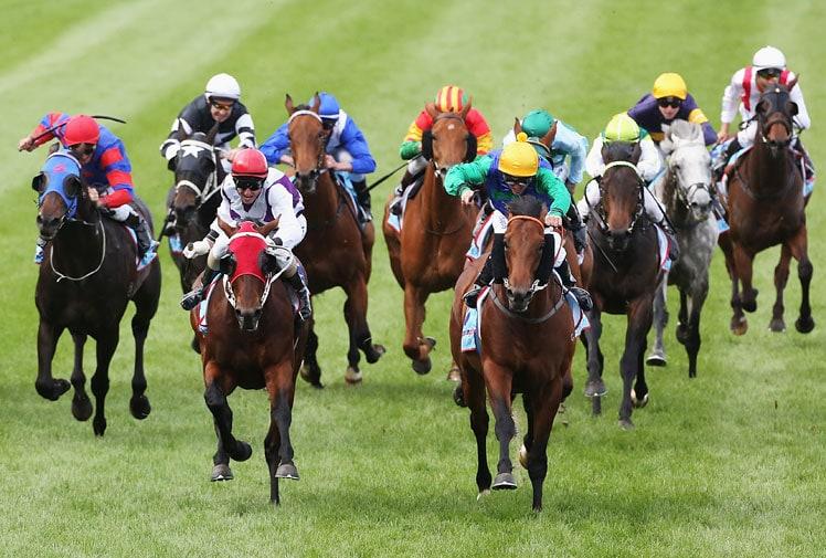 ufa168bet จะเป็นเซียนพนันแข่งม้าต้องรู้จักพันธุ์ม้าแข่ง